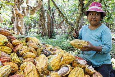 EL CEIBO: Ein bolivianischer Kakao-Kleinbauernverband der Superlative