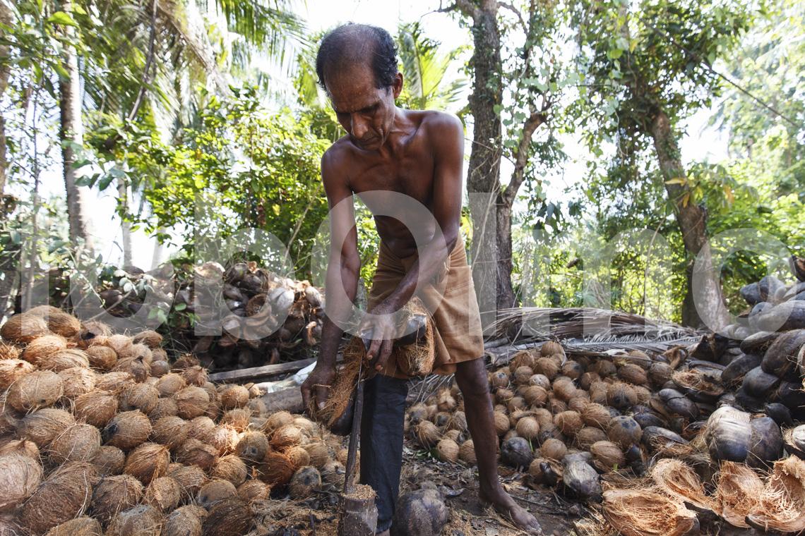 Öffnen der Kokosnuss