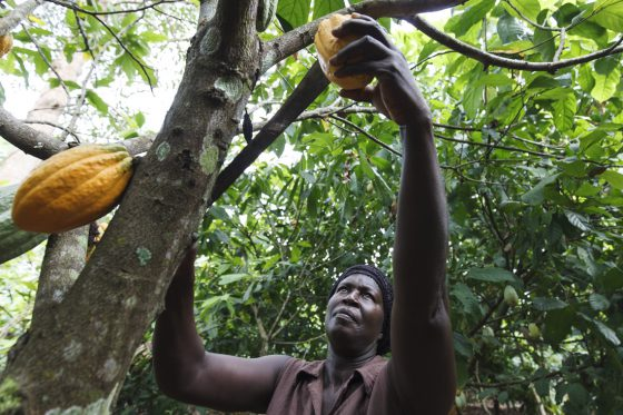 Theresa: Kakaobäuerin und Schokoladenfabrikantin