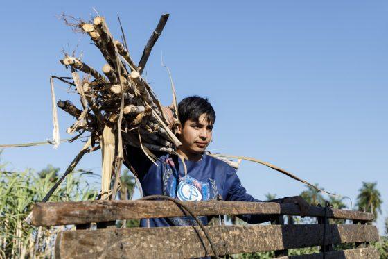 Paraguay: Zuckerrohrbauern leben ihren Traum
