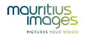Logo mauritius-images