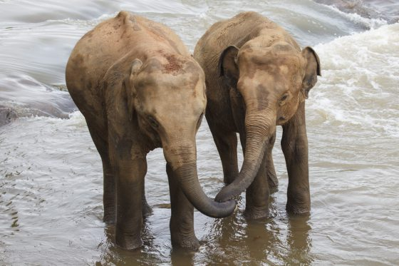 Elefanten-Traumberuf: Kotproduzent für MAXIMUS
