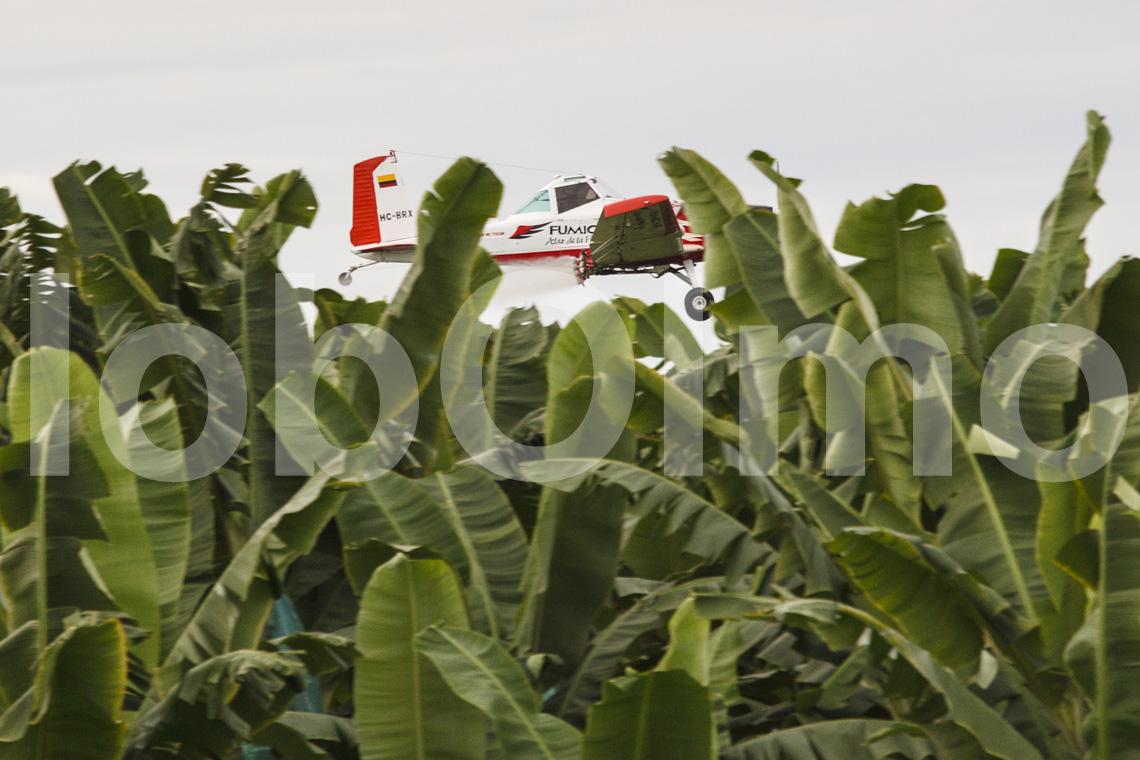 Sprühflugzeug über einer Bananenplantage in Ecuador